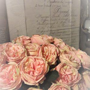 Blumen Rose