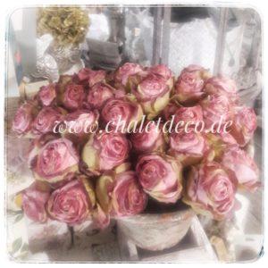 Romantik-Rosen